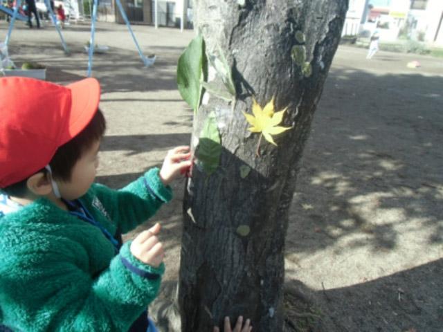 画像:葉っぱの芸術?