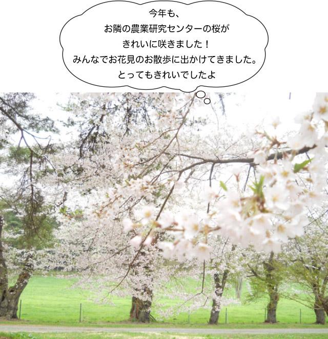 画像:みんなでお花見のお散歩に出かけてきました