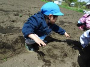 """画像:""""おおきくな~れ!""""と土をかぶせます。"""