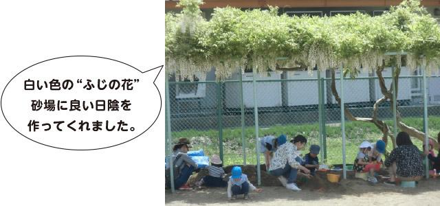 画像:ふじの花3