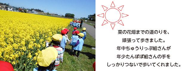 画像:菜の花畑4