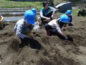 画像:ジャガイモ植え4