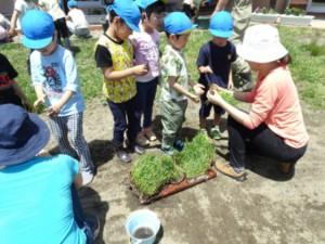 画像:苗の植え方を教えていだき挑戦!
