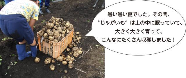 画像:こんなにたくさん収穫しました!
