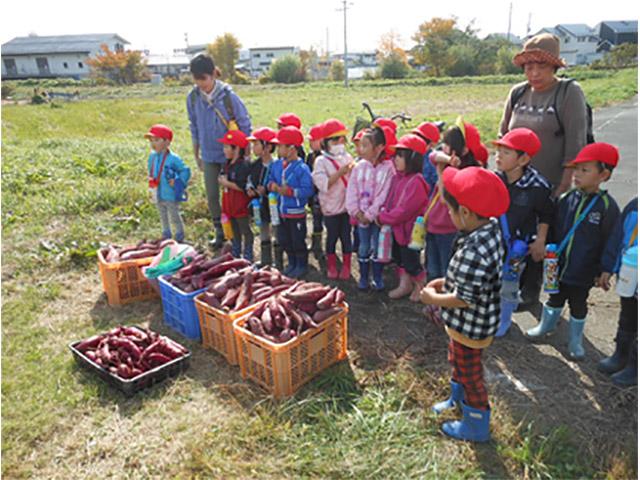 画像:収穫したさつま芋をこんなにたくさんいただいて帰ります!