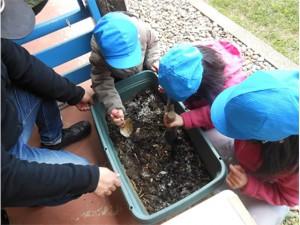 画像:よく耕して、柔らかいベットを作ります