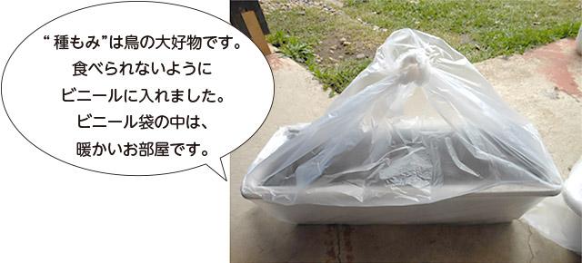 画像:お米づくり7