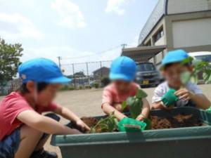 画像:今日はプランターに野菜と花の苗を植えます!