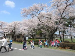 画像:「桜のトンネル」「みんなでお散歩楽しかったね♡」