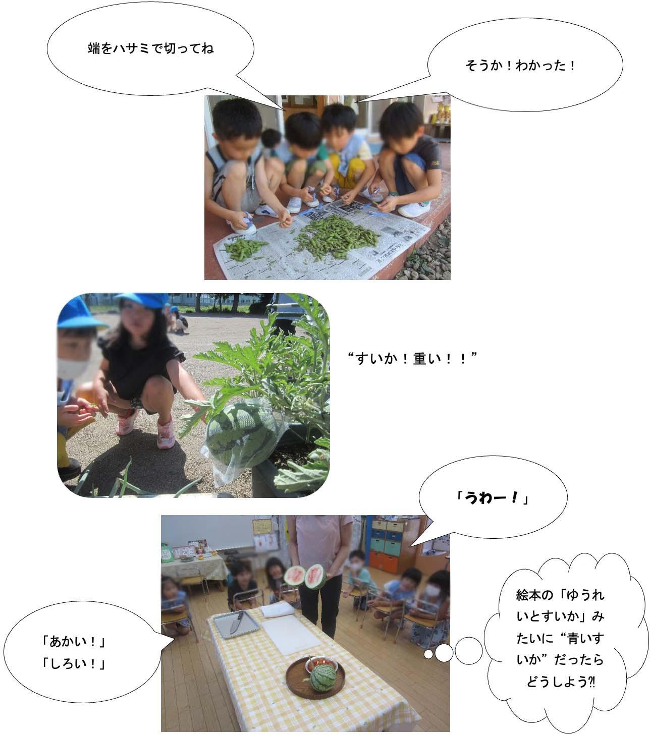 画像:夏野菜収穫しました